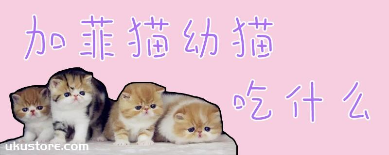 加菲猫幼猫吃什么
