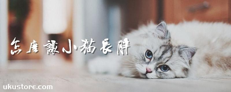 怎么让小猫长胖