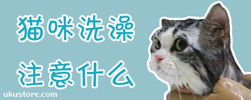 猫咪洗澡注意什么