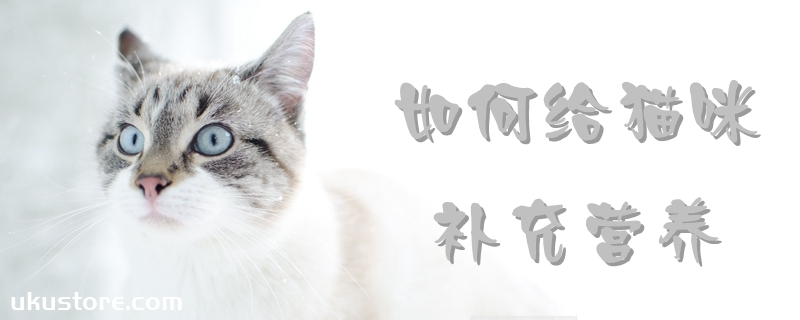 如何给猫咪补充营养