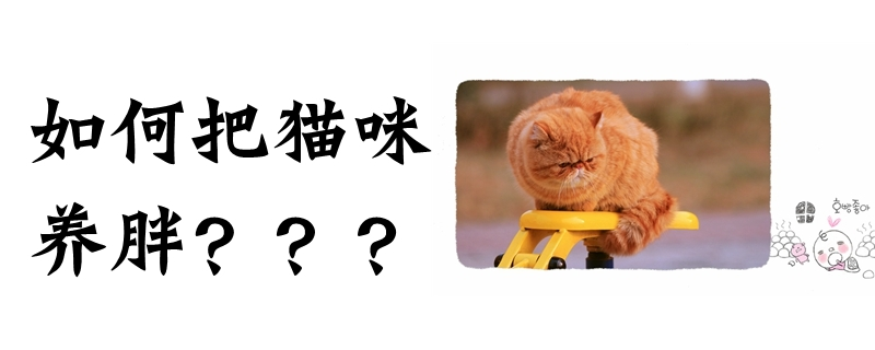 如何把猫咪养胖