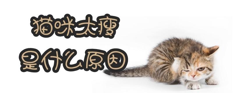 猫咪太瘦是什么原因
