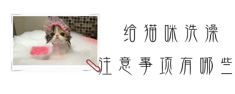 给猫咪洗澡的注意事项有哪些