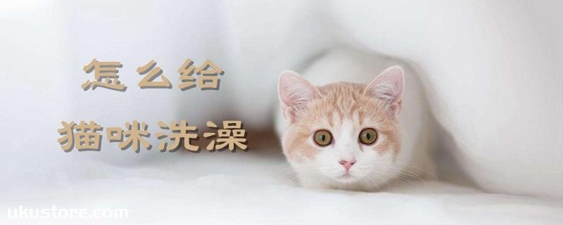怎么给猫咪洗澡