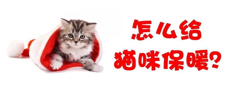 怎么给猫咪保暖