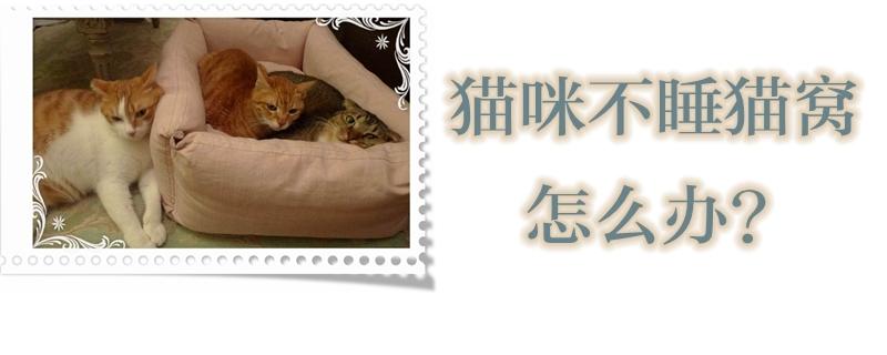 猫咪不睡猫窝怎么办