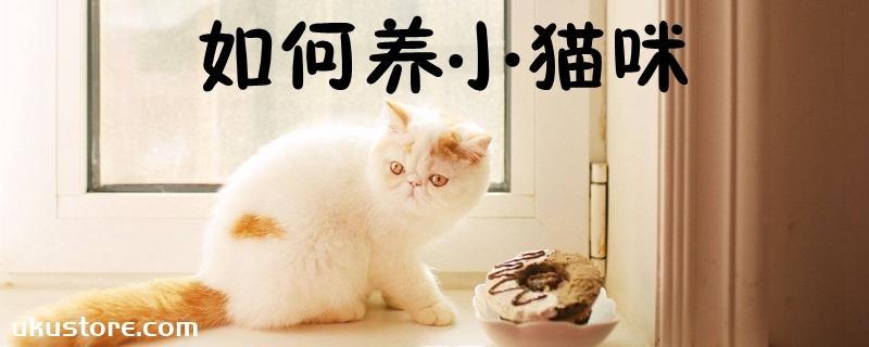 如何养小猫咪
