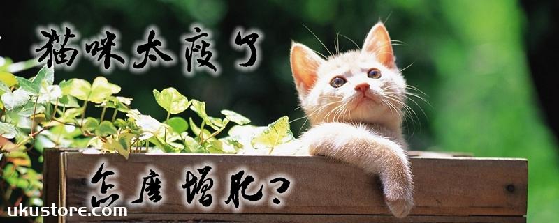 猫咪太瘦了怎么增肥