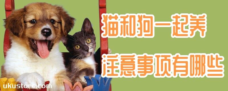 猫和狗一起养注意事项有哪些