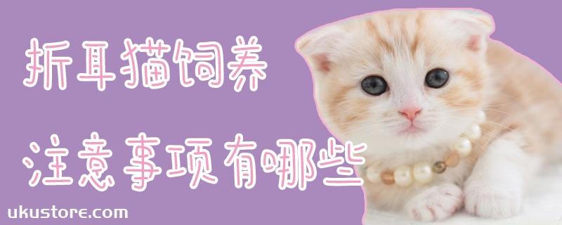 折耳猫饲养注意事项有哪些