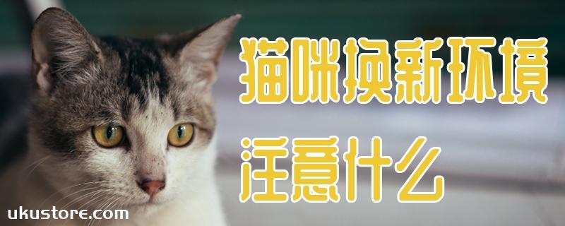 猫咪换新环境注意什么