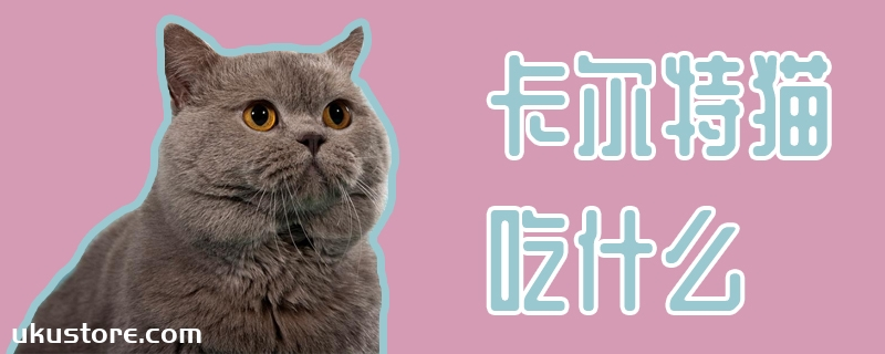 卡尔特猫吃什么