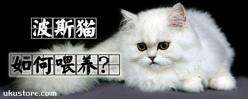 波斯猫如何喂养