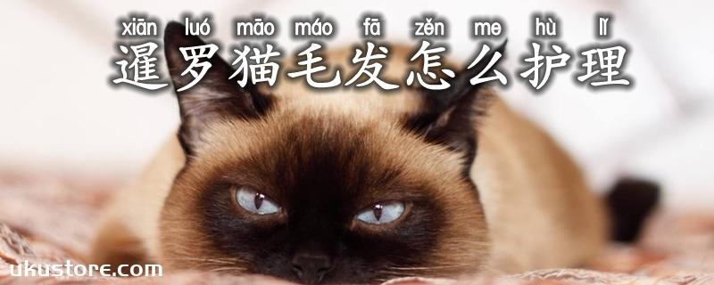 暹罗猫毛发怎么护理