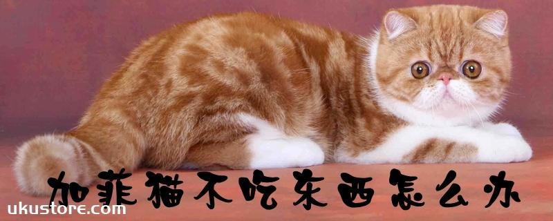 加菲猫不吃东西怎么办