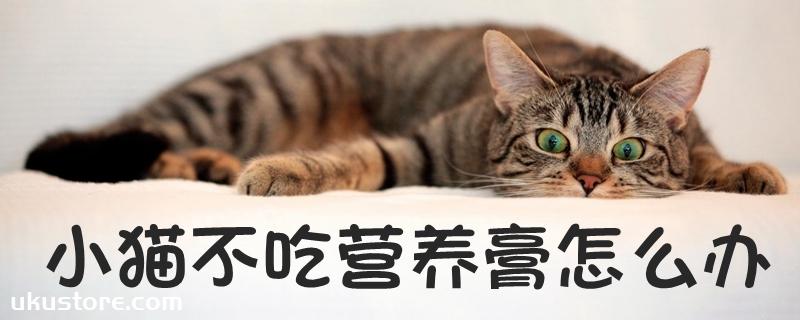 小猫不吃营养膏怎么办