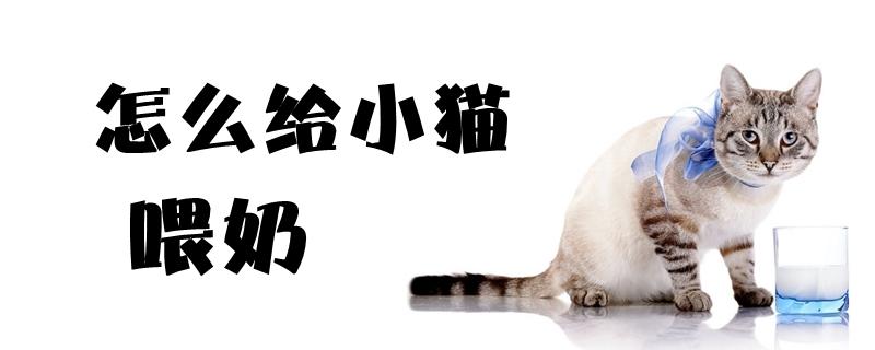 怎么给小猫喂奶