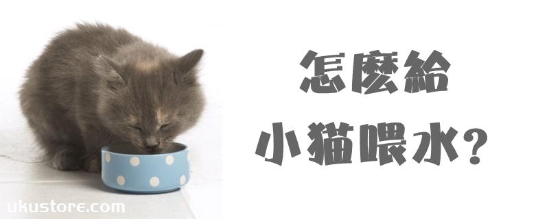 怎么给小猫喂水