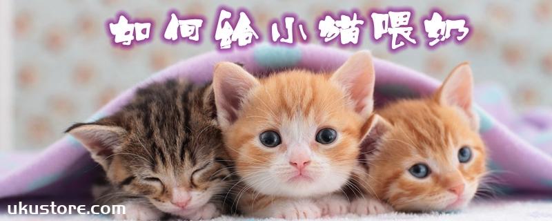 如何给小猫喂奶