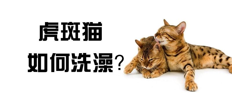 虎斑猫如何洗澡