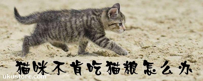 猫咪不肯吃猫粮怎么办