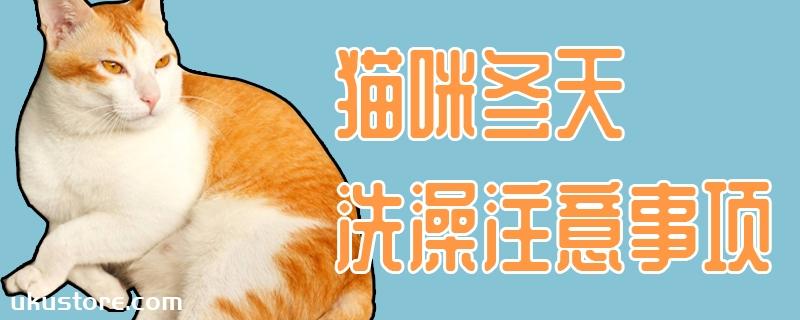 猫咪冬天洗澡注意事项