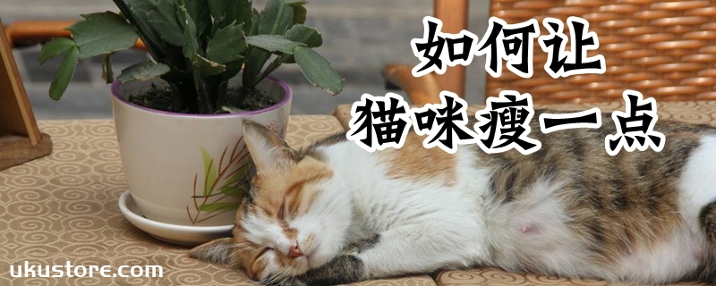 如何让猫咪瘦一点