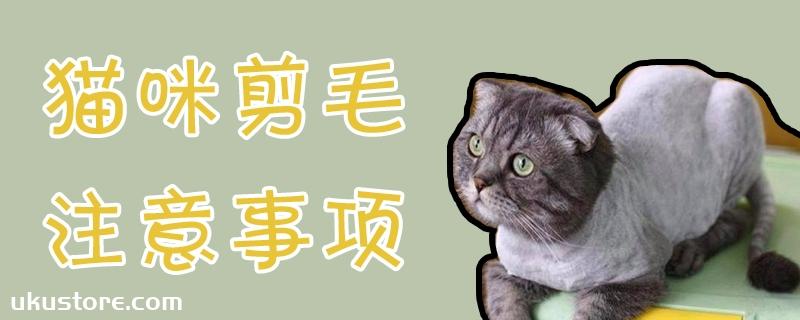猫咪剪毛注意事项