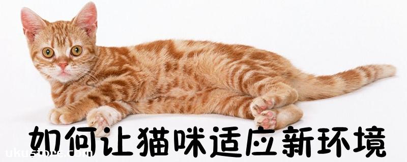 如何让猫咪适应新环境
