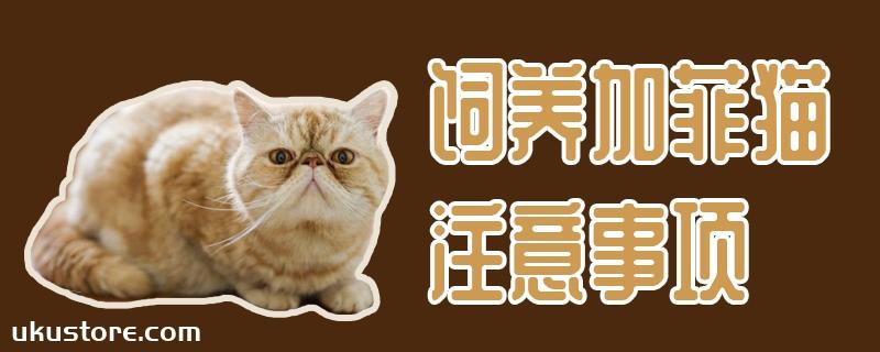 饲养加菲猫注意事项