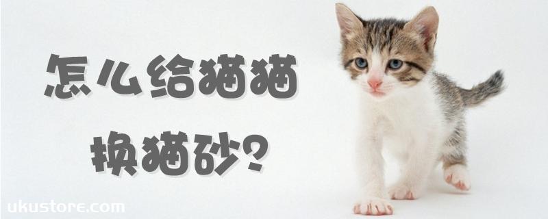 怎么给猫猫换猫砂