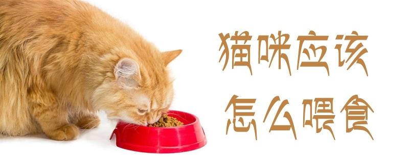 猫咪应该怎么喂食