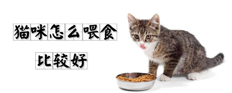 猫咪怎么喂食比较好