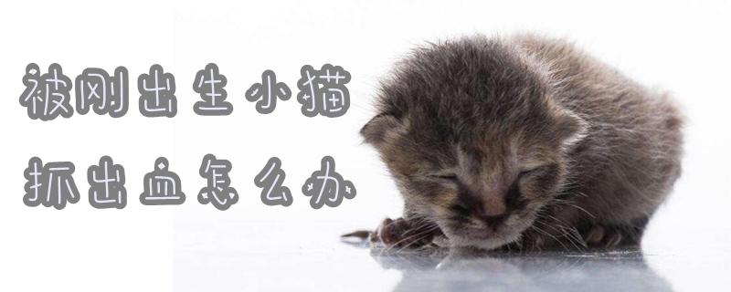 被刚出生小猫抓出血怎么办