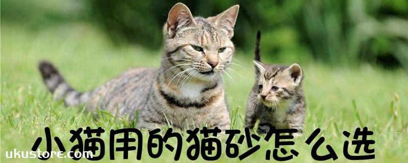 小猫用的猫砂怎么选