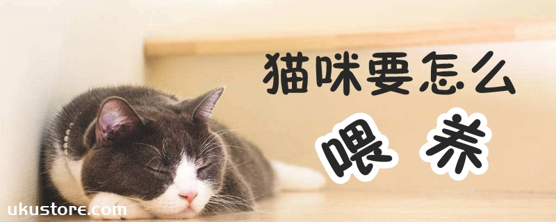 猫咪要怎么喂养