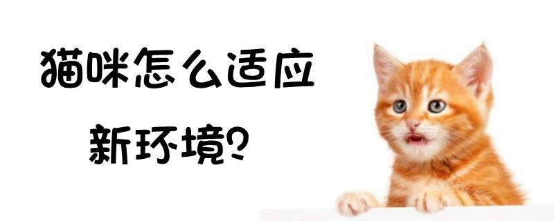 猫咪怎么适应新环境