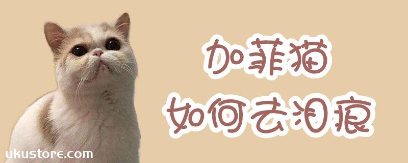 加菲猫如何去泪痕