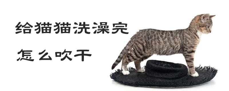 给猫猫洗澡完怎么吹干
