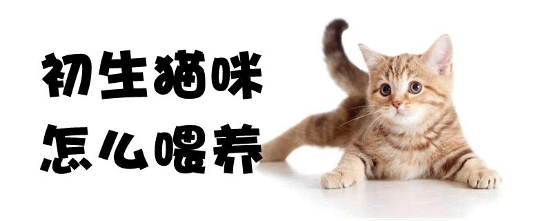初生猫咪怎么喂养
