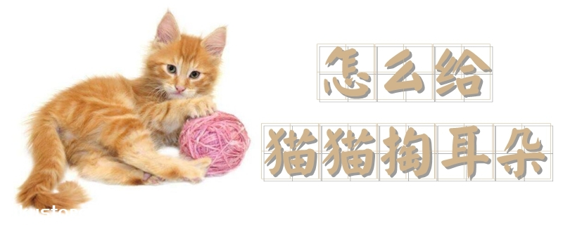 怎么给猫猫掏耳朵