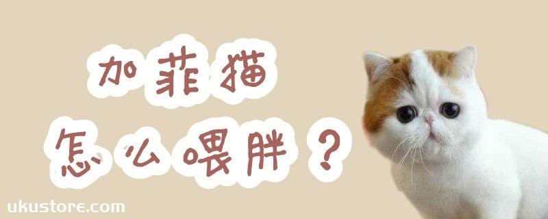 加菲猫怎么喂胖