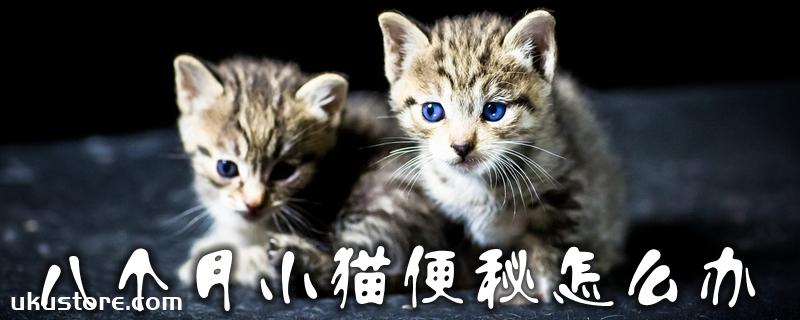 八个月小猫便秘怎么办