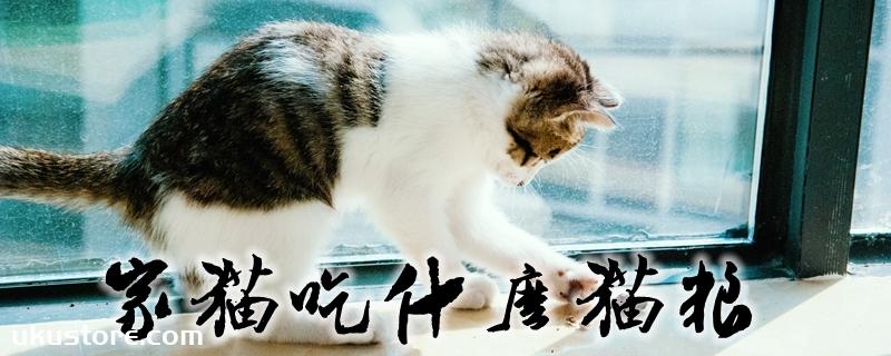 家猫吃什么猫粮