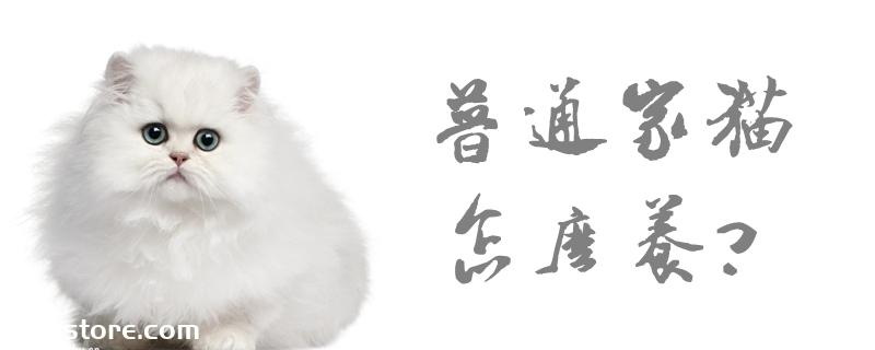 普通家猫怎么养