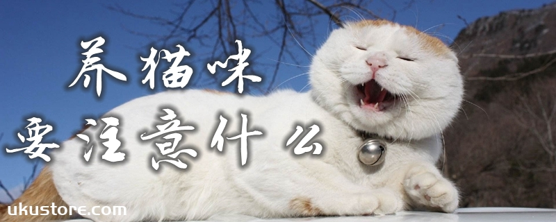 养猫咪要注意什么