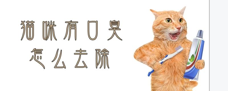 猫咪有口臭怎么去除